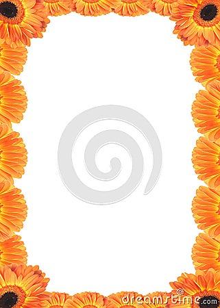 Frame of Gerber flowers.