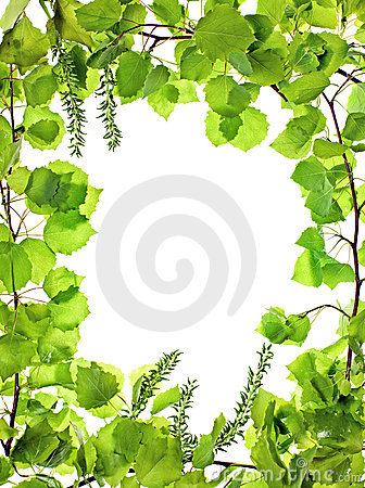 Frame of green asp leafage;
