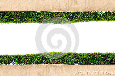 Frame green grass isolated on white background