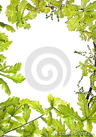 Frame of green oak leafage;