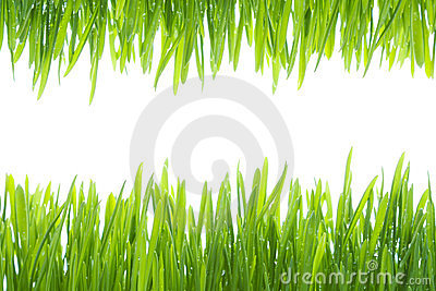 The frame made of  wet grass