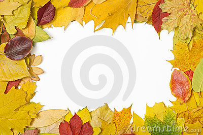 Frame of mixed autumn leaves