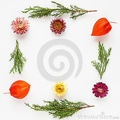 Free Frame Of Dry Flowers And Juniper Twigs On White Background. Stock Photos - 71513103