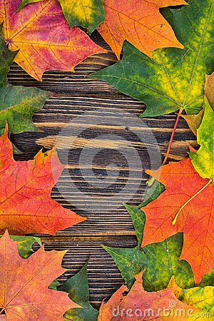 Free Frame Of Yellow, Green And Red Autumnal Colored Maple Leaves On Wooden Background. Fall Foliage Stock Photography - 101198842
