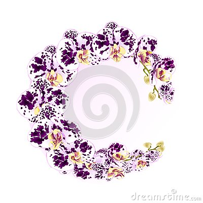 Free Frame Orchid Phalaenopsis Spotted Purple And White Flowers Tropical Plants Green Stem And Buds Vintage Vector Botanical Illustrati Stock Photo - 107623990