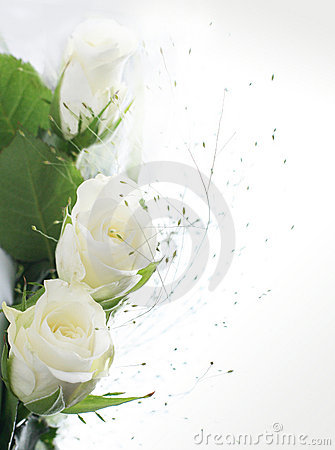 Free Frame Part With White Roses Stock Photos - 6534043