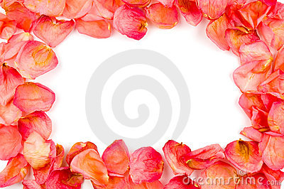 Frame from red rose petals