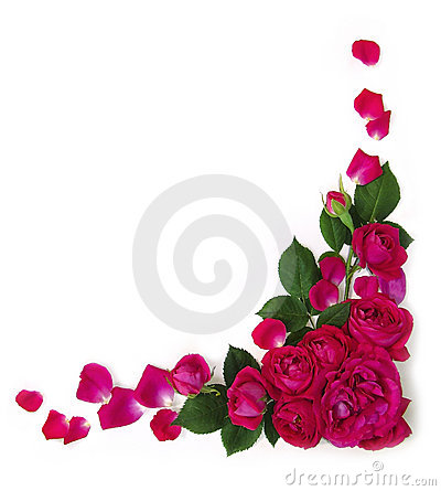 Free Frame Roses Stock Photos - 14646893