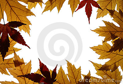 Frame from Silver and Japanese Maple Leaves