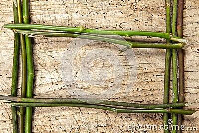 Frame of stems