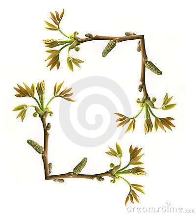 Frame of tree branch with new leaves