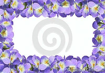 Frame from violet viola