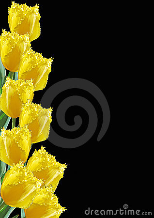 Frame from yellow tulips