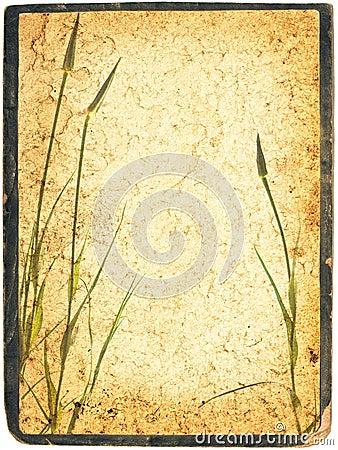 Framed herbal collage