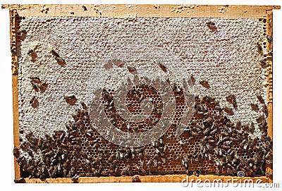 Framework with honey