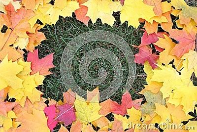 Framework from maple leaves