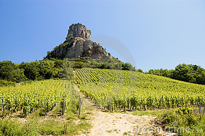 France Burgundy Vineyard with rock