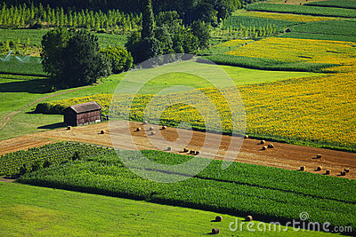 France green field panorama
