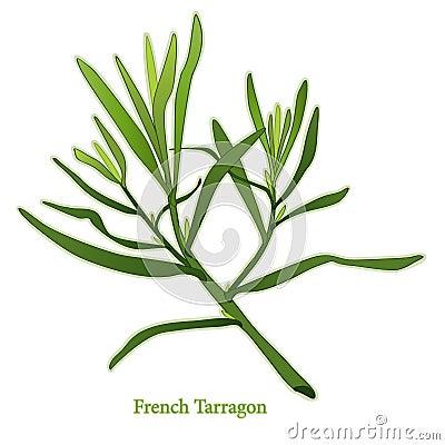 Francuski świeży zielarski estragon