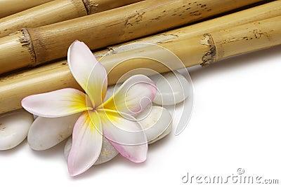 Frangipani and Bamboo