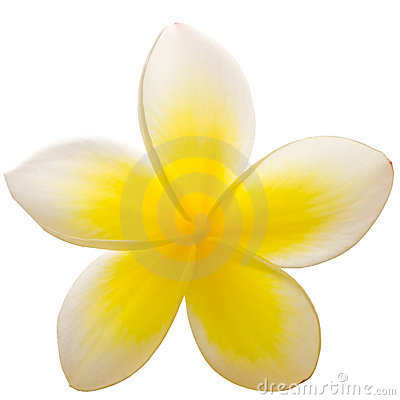 Free Frangipani Closeup Stock Photo - 11684030