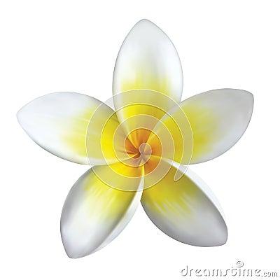 Free Frangipani Flower Stock Photography - 8748932