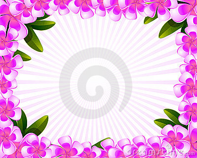 Flower Picture Frame on Frangipani Flowers Frame Stock Photography   Image  14780332