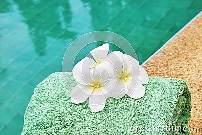 Frangipani flowers at poolside