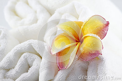 Frangipani flowers and Towel for spa