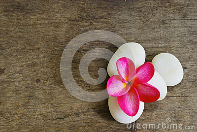 Frangipani and Rock on wood for spa room