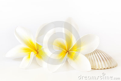 Frangipani and Seashell