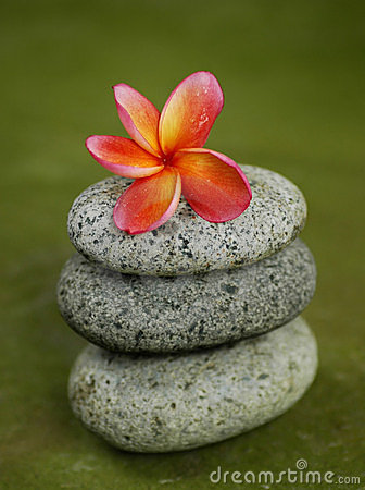 Frangipani on zen stones