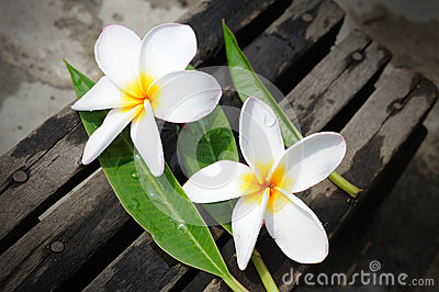 Frangipanis flowers