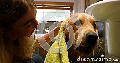 Frau, die einen Hund mit Tuch im Badezimmer 4k säubert stock footage