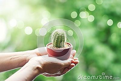 frau die leicht einen kleinen kaktus in den h nden auf. Black Bedroom Furniture Sets. Home Design Ideas