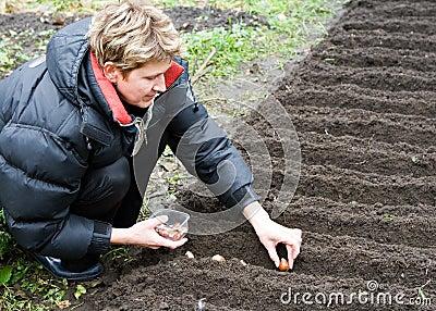 Frau pflanzt Tulpen