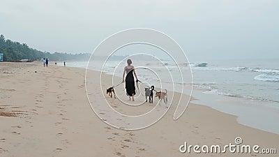 Frauenhunde gehen entlang die Küstenlinie, Ozeanstrand-Küstenmeer der Gruppe drei Hunde stock video