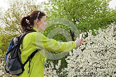 Frauenwanderer, der Foto eines blühenden Baums macht