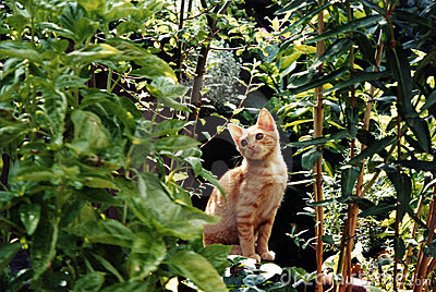 Fred the Jungle Cat