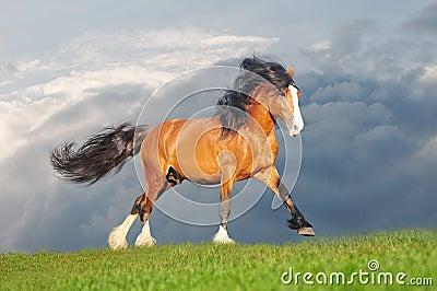 Free draft horse