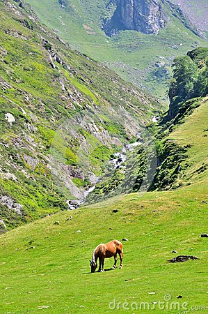 Free horse eating grass in the pyrenees mountains