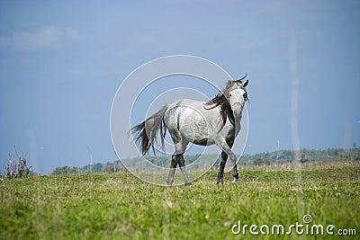 Free horse running
