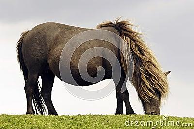 Free-living horse