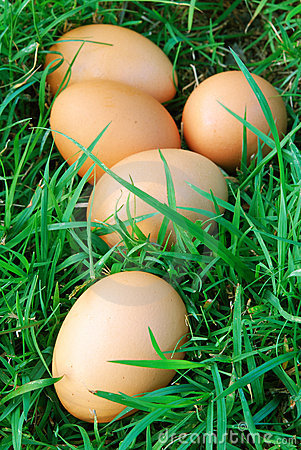 Free Free Range Eggs Royalty Free Stock Photos - 14581728