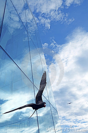 Freegate bird
