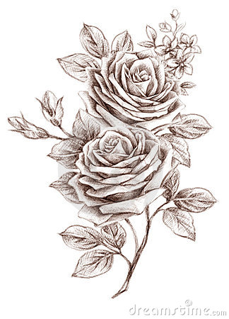 Free Freehand Drawing Rose 01 Stock Photos - 19168693