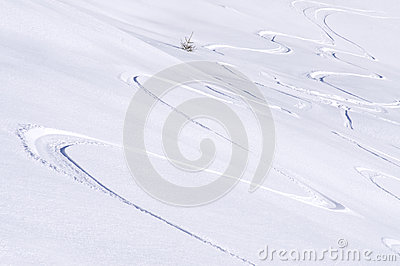 Freeride tracks on powder snow