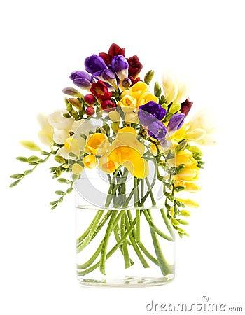 Freesia flowers