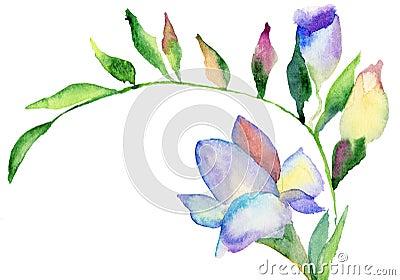 Freesia flowers, watercolor illustration