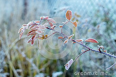 Freezing branch.